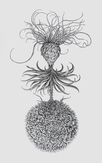 Angela SU, <i>Aster</i>,2019. Generously donated by the artist and Blindspot Gallery.