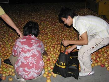 Gu Dexin's Apples.