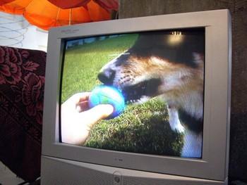 Koki Tanaka, Dog Will Save the World, 2002-2005, DVD, 1 minutes 30 seconds