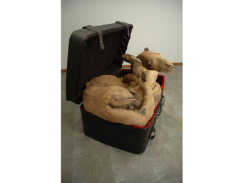 Arabian Delight, 2008, Rexine suitcase, taxidermied camel, metal rods, cotton wool and fabric