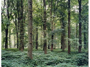 Forest - Location of the Battle of Somme, Delville Wood, France (ed.5), 2002