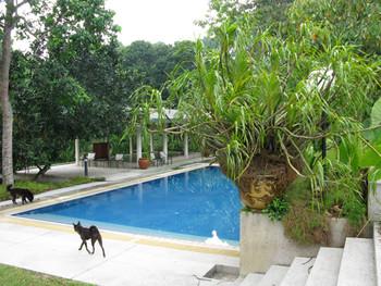 Swimming pool at the Rimbun Dahan compound