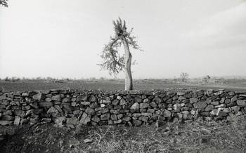 Virpur Samadi (1988)