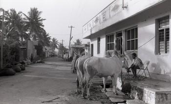 Muggulu (Rangoli), Bangalore (1988)