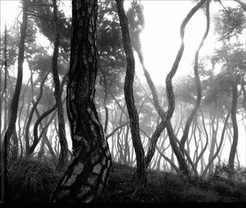 Bae, Bien-U: Sacred Wood