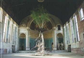 Shinji Turner-Yamamoto: Global Tree Project