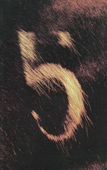 Wind/Horse/Flag: Zhang Dali's New Work Show