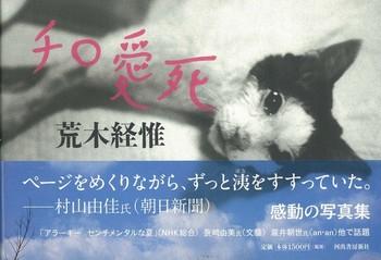 Nobuyoshi Araki Cat