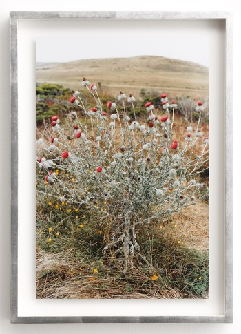 2011<br />Chromogenic print<br />48.4 x 32 cm<br /> Edition 1 of 8 with 2AP<br />Donated by the artist and Maho Kubota Gallery.<br />Award-winning artist Yurie Nagashima's series Wildflowers– comprising photographs of a field in Berkeley, California–stands as a formal challenge to the loss of Japanese well-being that resulted from the 2011 Fukushima nuclear power plant accident. Set within a silver-leaf frame specially chosen by the artist, Untitled's unassuming flowers in a familiar environment capture a crucial moment for Nagashima, when with a sense of relief she began feeling that everything would be all right–and that she could inhale and exhale without worry.