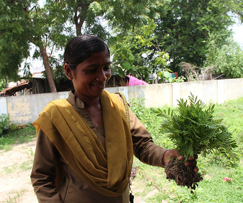 600x500_2. Forestry Department representative in Wadhwana offering saplings for planting