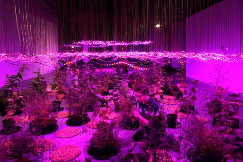 zheng-2018-after-science-garden-02-3.jpg