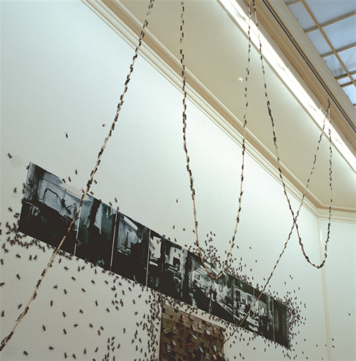, Photo installation (Photo, plastic ants, rope, burlap, sugar), Photo: 120cm x 750cm.