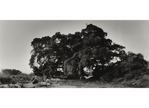 Image: Simryn Gill, Scale or Tasha and the Tree (2005, 2013).